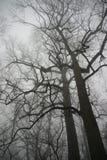 Zwei Bäume Stockfoto