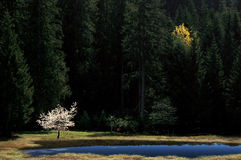 Zwei Bäume Stockfotos