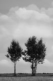 Zwei Bäume Stockbilder