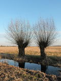 Zwei Bäume Stockfotografie