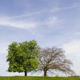 Zwei Bäume Lizenzfreies Stockbild