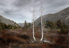 Zwei Bäume. lizenzfreie stockfotografie