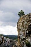 Zwei Bäume auf Berg lizenzfreie stockfotos