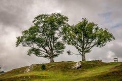Zwei Bäume auf dem Horizont, umgeben durch Regenwolken stockbilder