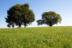 Zwei Bäume auf einer Wiese Lizenzfreies Stockfoto