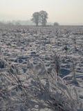 Zwei Bäume auf schneebedecktem Feld Stockfotografie