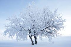 Zwei Bäume, die den Schnee vereinigt als einer aushalten Stockbilder