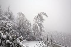 Zwei Bäume, die unter den fallenden Schnee verbiegen Stockfoto