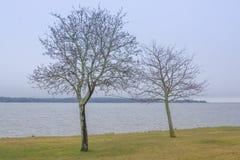 Zwei Bäume durch See Vanern Lizenzfreie Stockfotografie