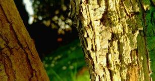 Zwei Bäume im Garten Stockfoto