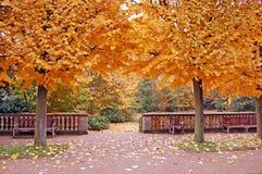 Zwei Bäume im Herbst Stockbild