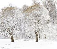 Zwei Bäume im Schnee Stockfotos