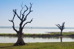 Zwei Bäume in Mandalay Lizenzfreie Stockbilder