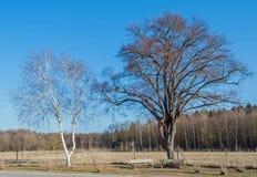 Zwei Bäume mit zwei Bänke Stockfoto