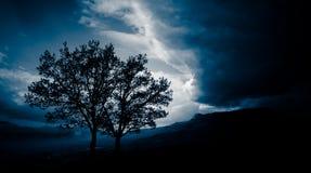 Zwei Bäume vor einem Sturm Stockfotos