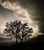 Zwei Bäume vor einem Sturm Lizenzfreies Stockbild