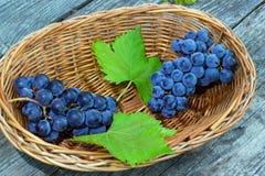 zwei Bündel der blauen Trauben mit grünen Blättern Stockbild
