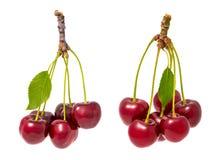 Zwei Bündel der roten süßen Kirschen Prunus avium Lizenzfreies Stockbild