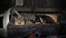 Zwei Bauernhofkatzen, die in einem Kasten mit Decke in einer Scheune stillstehen stockbilder
