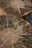 Zwei Baum-Ringe Lizenzfreies Stockbild