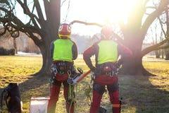 Zwei Baumzüchtermänner, die gegen zwei große Bäume stehen Die Arbeitskraft mit dem Sturzhelm, der auf Höhe auf den Bäumen arbeite stockbilder