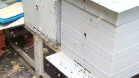 Zwei Bienenstöcke stock video footage