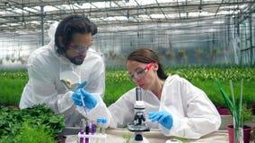 Zwei Biologen haben eine Forschung mit Chemikalien im Grün stock video