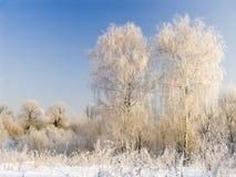 Zwei Birken im Hoarfrost stockfotografie