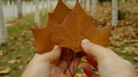 Zwei Blätter in der Hand, rüttelnd im Wind, Wald als Hintergrund stock video footage
