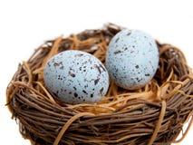 Zwei blaue Rotkehlchen-Eier in der Nest-Dekoration Lizenzfreies Stockbild