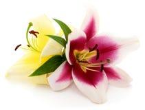 Zwei Blumen Stockfotografie