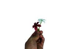 Zwei Blumen für Geschenke Stockfotos