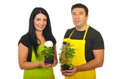 Zwei Blumenhändlerteam-Holdingchrysanthemen Lizenzfreie Stockbilder