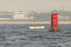 Zwei Bojen voll von Seelöwen Stockfotografie