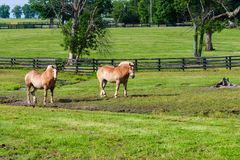 Zwei braune Entwurfspferde auf Ackerland Lizenzfreie Stockbilder