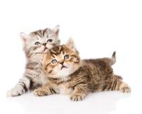 Zwei britische Kätzchen, die oben schauen Getrennt auf weißem Hintergrund Lizenzfreie Stockbilder
