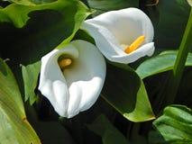Zwei Buchten im Blumengarten Stockbilder