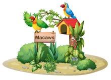 Zwei bunte Papageien über einem Schild und einem Vogelhaus Stockbild