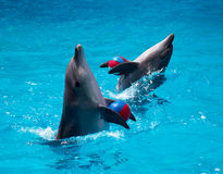 Zwei Delphine Stockbilder