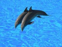 Zwei Delphine Lizenzfreies Stockfoto