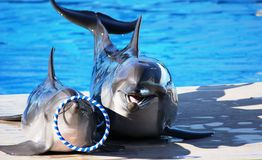 Zwei Delphine auf dem Land Lizenzfreie Stockfotografie