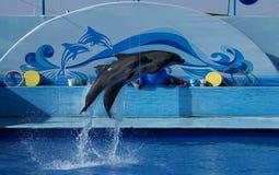 Zwei Delphine in der Luft Lizenzfreies Stockfoto