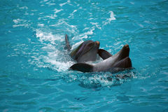 Zwei Delphine schließen oben adler Stockbild