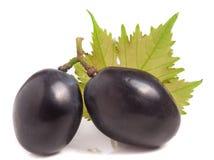 Zwei dunkelblaue Beeren von Trauben mit dem Blatt lokalisiert auf weißem Hintergrund Stockbilder