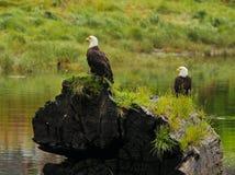 Zwei Eagles Sitzen Stockfotografie