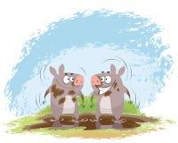 Zwei Eber im Schlamm Stockbilder