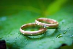 Zwei Eheringe auf einem Blatt Stockfotografie