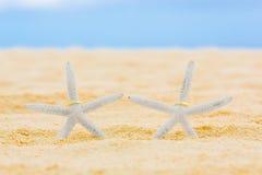 Zwei Eheringe mit zwei Starfish auf einem sandigen tropischen Strand Hochzeit und Flitterwochen in den Tropen Lizenzfreie Stockfotos