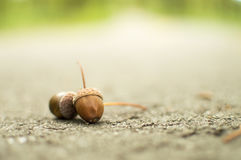 Zwei Eicheln auf der Straße Stockfoto