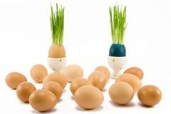 Zwei Eier im Eierbecher lizenzfreie stockfotos